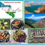 Новости Узбекистана от Uzreport.news